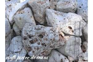 Rocce da Giardino Anticate della Murgia