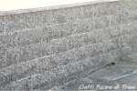 Serizzo Formazza cm. 31x15x1,5